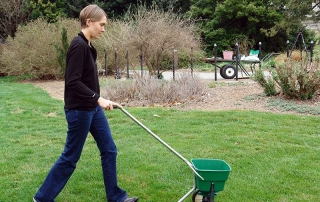 Apply fertilizer according to directions with a spreader.